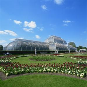 Palm House of Kew Gardens
