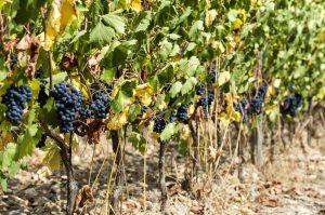 Tasting Wine in Chianti, Tuscany