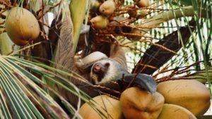 Explore Costa Rica with AESU!
