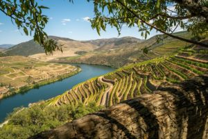 Discover 4 of Portugal's Incredible Wine Regions
